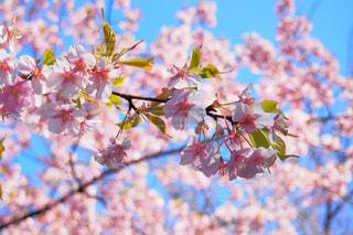 花の写真・画像素材[409577]
