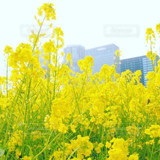 花の写真・画像素材[409682]