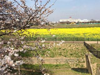 春の写真・画像素材[410675]