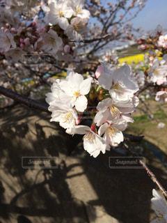 春の写真・画像素材[410676]