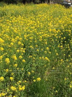 花の写真・画像素材[439507]