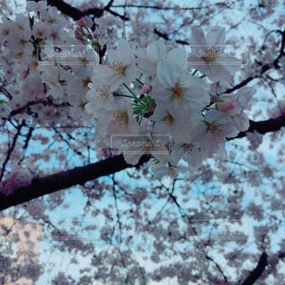 春 - No.414928
