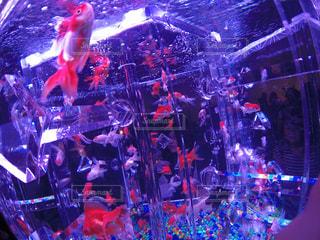 魚 - No.411302