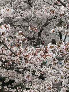花の写真・画像素材[419482]
