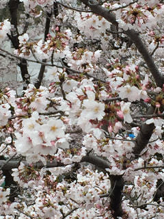 春の写真・画像素材[419486]