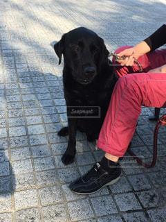 犬 - No.432031