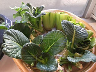 緑の植物のクローズアップの写真・画像素材[2930515]
