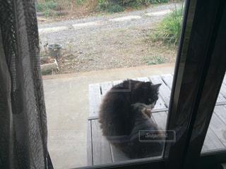 猫の写真・画像素材[411500]