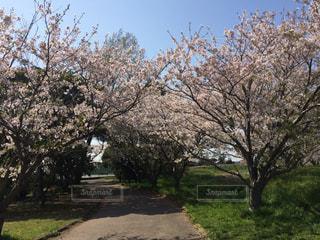 春 - No.430957