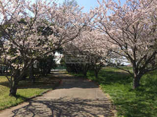 春 - No.430973
