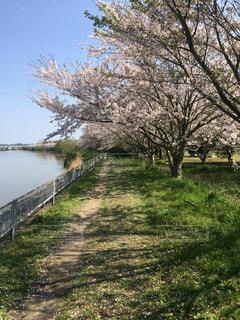 春 - No.430975