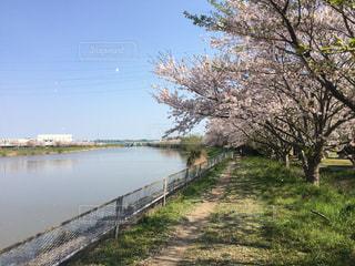 春 - No.430976
