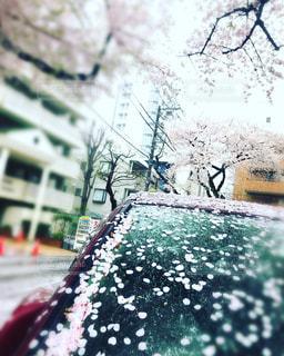 桜吹雪の写真・画像素材[568381]