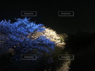 桜の写真・画像素材[431633]
