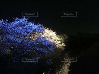 No.431635 桜