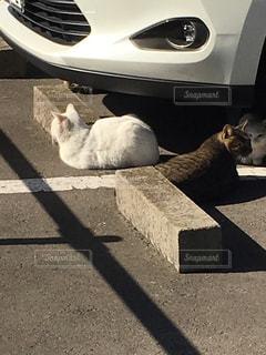 猫の写真・画像素材[413545]