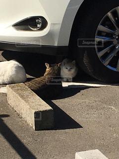 猫の写真・画像素材[413546]