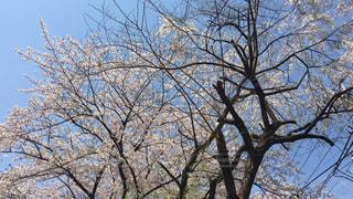 花の写真・画像素材[415546]