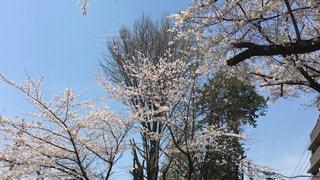 花の写真・画像素材[415547]