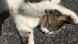 猫の写真・画像素材[459432]