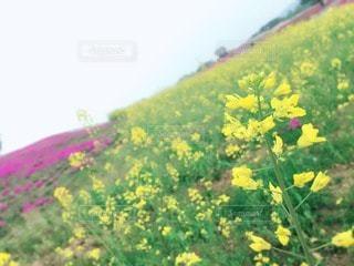 花の写真・画像素材[15262]
