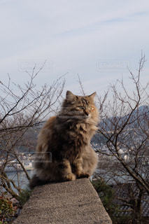猫の写真・画像素材[411947]