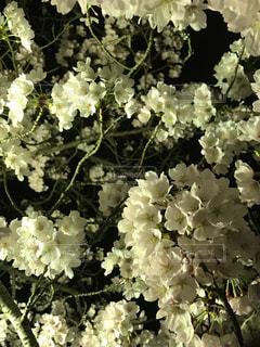 春の写真・画像素材[418996]