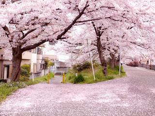 春の写真・画像素材[412996]
