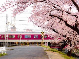 春の写真・画像素材[412999]