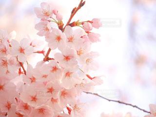 春の写真・画像素材[413000]