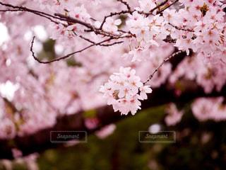 春の写真・画像素材[413005]