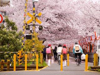 春の写真・画像素材[413006]