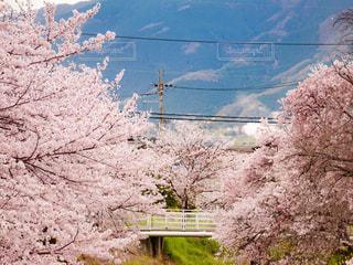 春の写真・画像素材[413008]