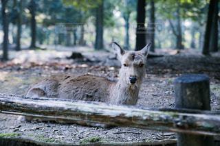 動物の写真・画像素材[448782]