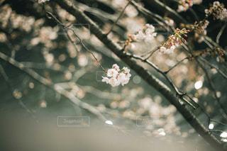 風景の写真・画像素材[423144]