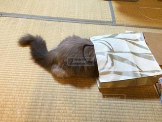 #猫の写真・画像素材[432005]