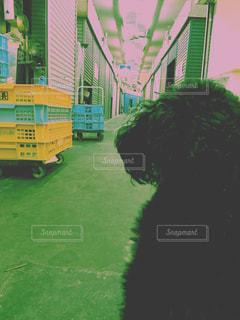 犬の写真・画像素材[443409]