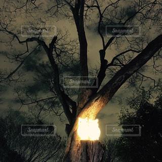 夜の写真・画像素材[443418]