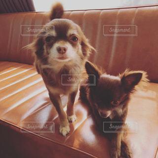 犬の写真・画像素材[413371]