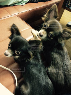 犬の写真・画像素材[419349]