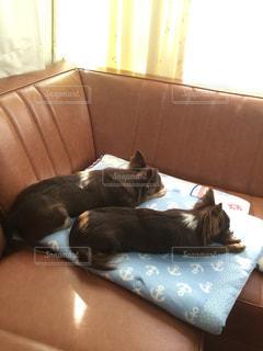 犬の写真・画像素材[419352]