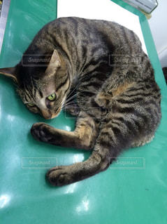 猫 - No.419223