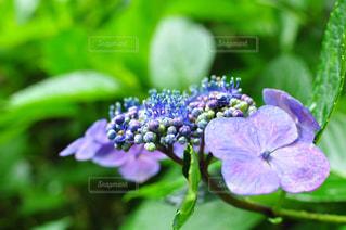 花の写真・画像素材[580222]