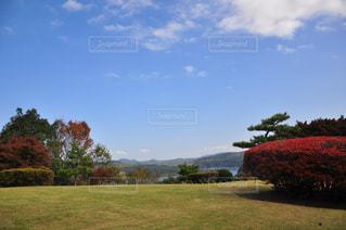 草と木と水の大きな体の写真・画像素材[863068]