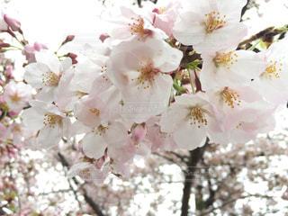 近くの花のアップの写真・画像素材[1028309]