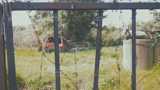 草の中に立っている人の写真・画像素材[1127262]