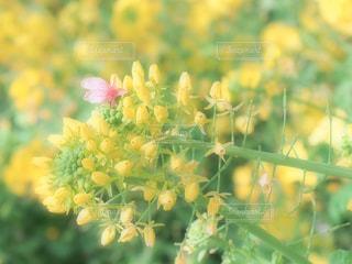 近くの花のアップの写真・画像素材[1863910]