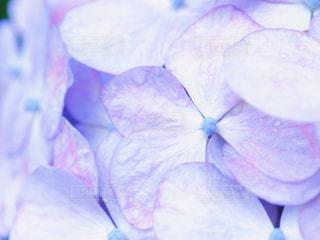 花のクローズアップの写真・画像素材[2220980]