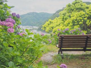 草の上に座っている木製の公園のベンチの写真・画像素材[2221612]