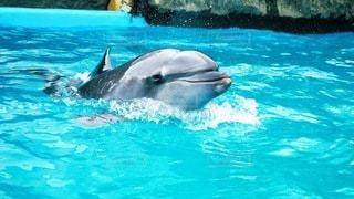 水のプールで泳ぐイルカの写真・画像素材[3370164]